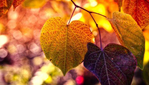 秋に多いトラブル(1)秋の風邪